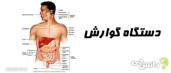 سیستم دستگاه گوارش و آناتومی آن