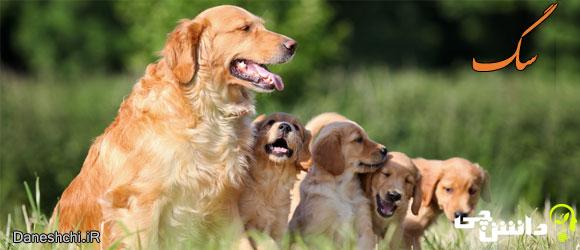 سگ ( Canis lupus familiaris)