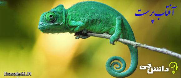 آفتاب پرست (Chameleon)