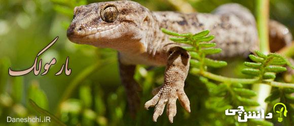 مارمولک ( Lizards)