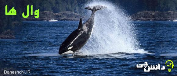 وال (نهنگ)