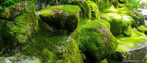 جلبک (algae)