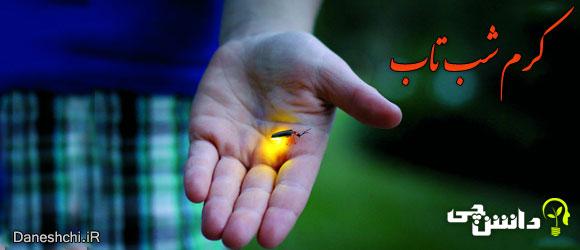 کرم شب تاب(bioluminescent firefly)