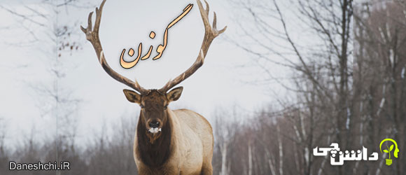 گوزن(deer)