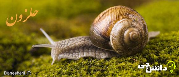 حلزون (Snail) - زندگی حلزون ها
