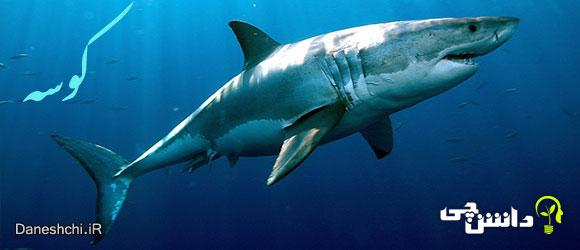 کوسه (shark) - زندگی کوسه ها