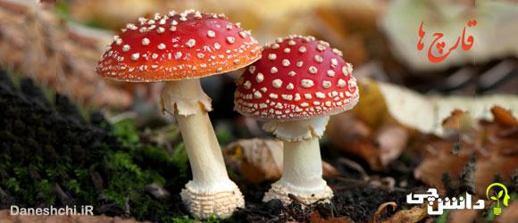 تحقیق درباره قارچ، ساختار و انواع آن