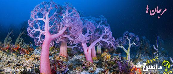 تحقیق در مورد مرجان ها و انواعشان