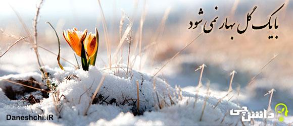 با یک گل بهار نمی شود